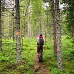 Wandern im Glaskogen Nationalpark.